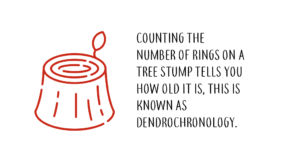 What is Dendrochronology
