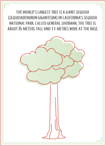 The worlds largest tree