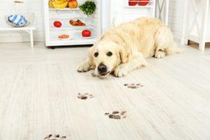 image of dog lying on wood floor